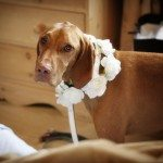 Bridal Party Dog