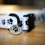 Nicky-Natalie-Wedding1-Best-Dog-Collar